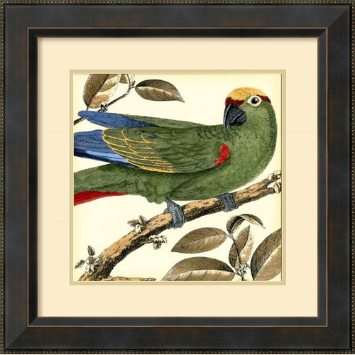 Amanti Art 'Tropical Parrot I' by Martinet Framed Painting Print by Amanti Art