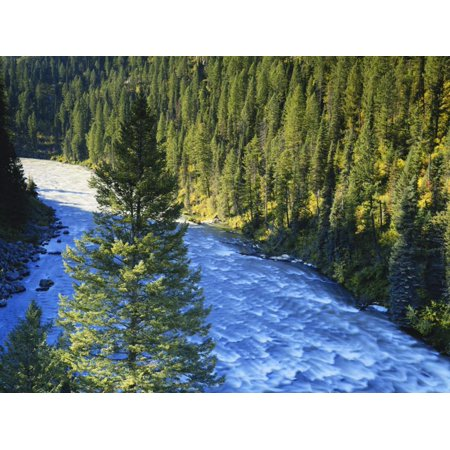 Conifer Forest Along River, Henrys Fork, Snake River, Targhee National Forest, Idaho, USA Print Wall Art By Scott T. Smith
