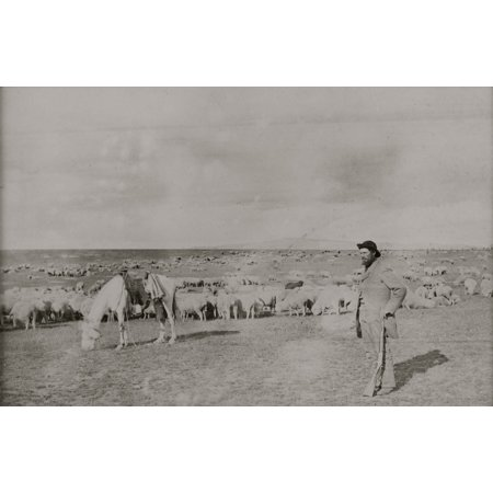 Large Albumen Photograph Of Sheep Herder With Winchester 1890S - Albumen Photograph Of Man And His Large Flock Of Sheep In New Mexico Holding A Winchester Rifle Poster Print