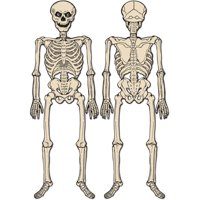 """2 Sided Halloween Jointed Creepy Spooky Skeleton Figurine Prop Decoration 4' 3"""""""