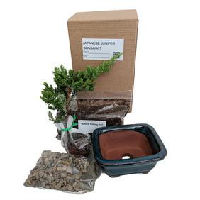 9greenbox Chinese Elm Bonsai Seed Kit Gift Complete Kit To Grow Chinese Elm Bonsai From Seed Walmart Com Walmart Com