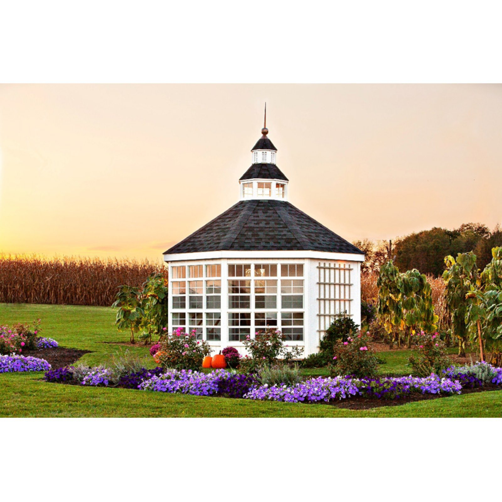 Little Cottage 12 ft. Panelized Garden Shed Greenhouse Kit