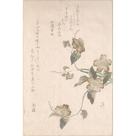 Yamabuki Flowers  Kerria Japonica  Poster Print By Unidentified Artist  18 X 24