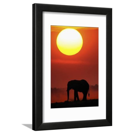 African Elephant (Loxodonta Africana) Silhouetted Against Orange Sky, Chobe River, Botswana Africa Sunset Photo Framed Print Wall Art By Lou Coetzer (River Silhouette)