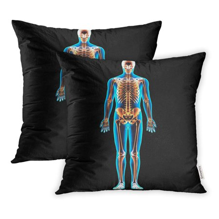 YWOTA Skeletal Skeleton Anatomy 3D Body Bone Muscular Pillow Cases Cushion Cover 16x16