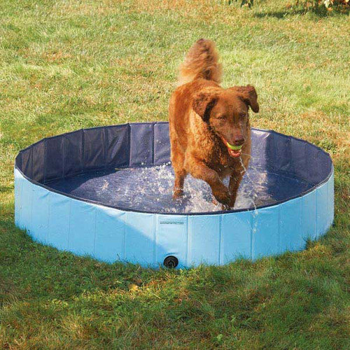 PetEdge Guardian Gear Splash About Dog Pools Sky Blue Small