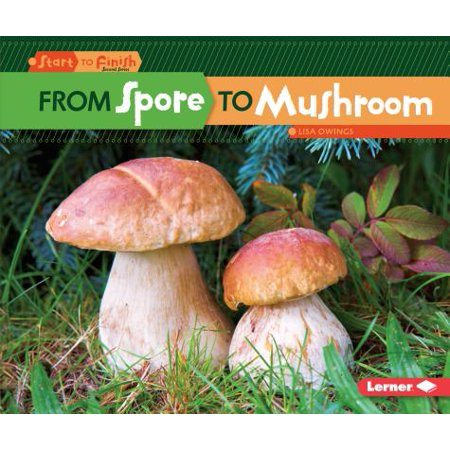 From Spore to Mushroom (Best Magic Mushroom Spores)