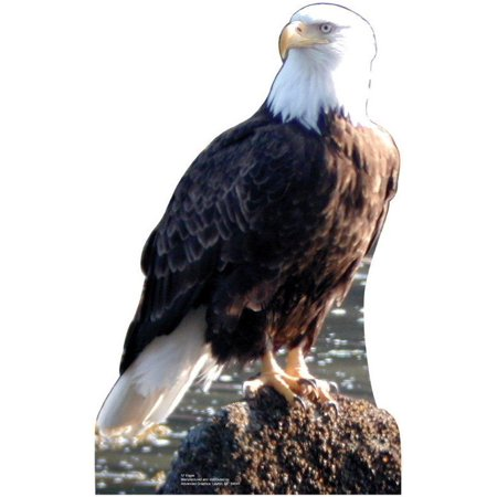 Advanced Graphics Animals Eagle Cardboard Stand-Up](Cardboard Animals)