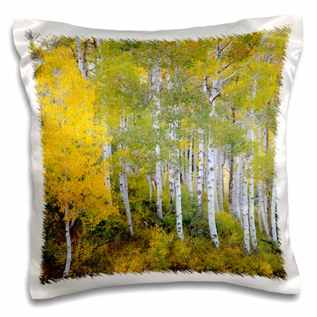 3Drose Quaking Aspen  Mt Nebo  Wasatch Mountains  Utah  Usa   Us45 Hga0426   Howie Garber  Pillow Case  16 By 16 Inch