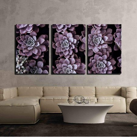 wall26 - 3 Piece Canvas Wall Art - Closeup of Purple Succulent - Modern Home Decor Stretched and Framed Ready to Hang - 16