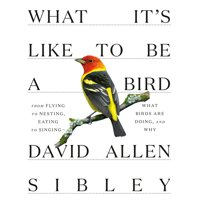Sibley Guides: What It's Like to Be a Bird : From Flying to Nesting, Eating to Singing--What Birds Are Doing, and Why (Hardcover)