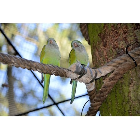 LAMINATED POSTER Couple Lovebird Fly Feather Parrot Bird Wings Poster Print 24 x 36 ()