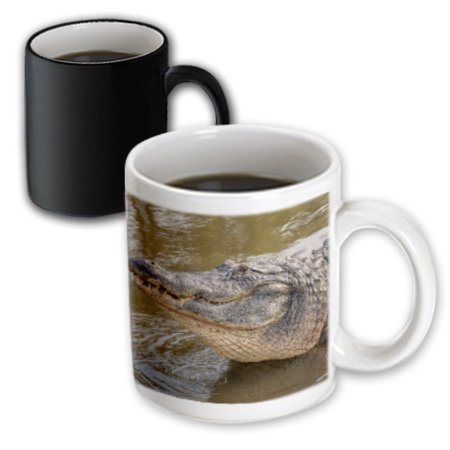 3dRose USA, Florida, Orlando, alligator doing water dance at Gatorland., Magic Transforming Mug, 11oz