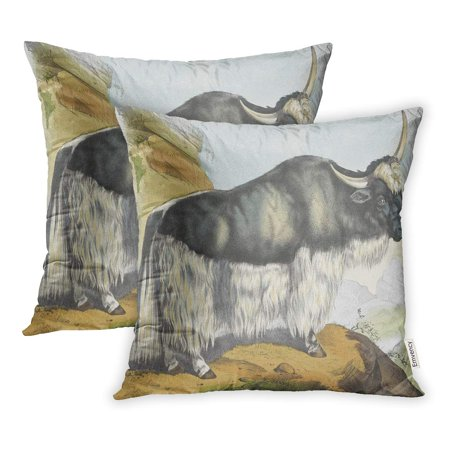 ECCOT Blue 19Th Yak in Rocky Landscape Jos Scholz C 1830 80 Dutch Lithograph Brown 247 Pillowcase Pillow Cover 16x16 inch Set of 2