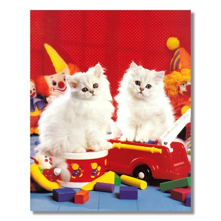 Two White Persian Kitten Cats Sitting on Toy Photo Wall Picture 8x10 Art Print