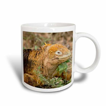 3dRose Ecuador, Galapagos, North Seymour. Land iguana, endemic species., Ceramic Mug, 15-ounce