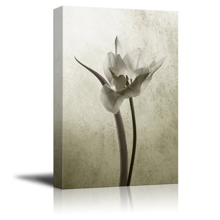 wall26 Canvas Print Wall Art - Transparent Tulip in Back Light on Rustic Background - Gallery Wrap Modern Home Decor | Ready to Hang - 12x18 inches (Halloween Clip Art Transparent Background)
