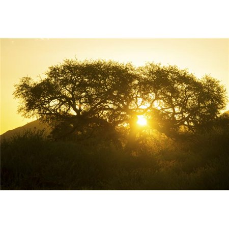 Posterazzi DPI12281809 Tree Silhouetted by The Sun at Dusk - Namibia Poster Print - 19 x 12 in. - image 1 de 1