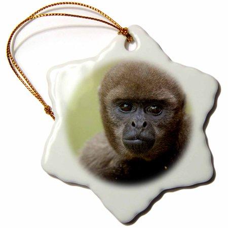 3dRose Common Woolly Monkey, Amazon Rain Forest, Ecuador - SA07 POX1085 - Pete Oxford, Snowflake Ornament, Porcelain, 3-inch