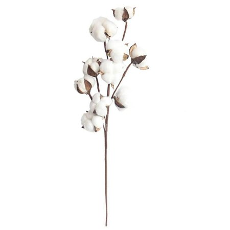 21-Inch Natural White Cotton Stem Flowers Cotton Boll Branches Farmhouse Rustic Style Vase Display Filler Floral Wedding Centerpiece Decorations ()