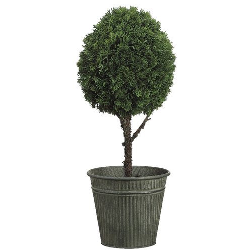 Tori Home Cedar Ball Round Tapered Topiary in Pot
