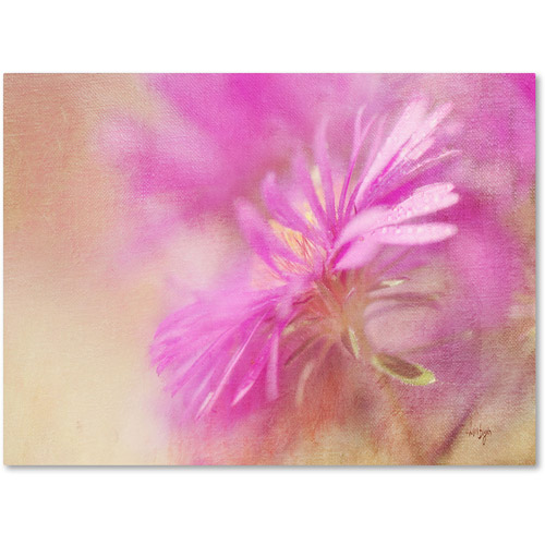 "Trademark Fine Art ""Dewy Pink Aster"" Canvas Art by Lois Bryan"