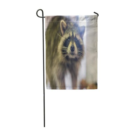 LADDKE Raccoon Shiny Black Nose and Long Mustache Looks Into The Camera Garden Flag Decorative Flag House Banner 12x18 inch