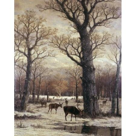 Deer Foraging Winter 19th C Artist Unknown Canvas Art - (18 x 24)
