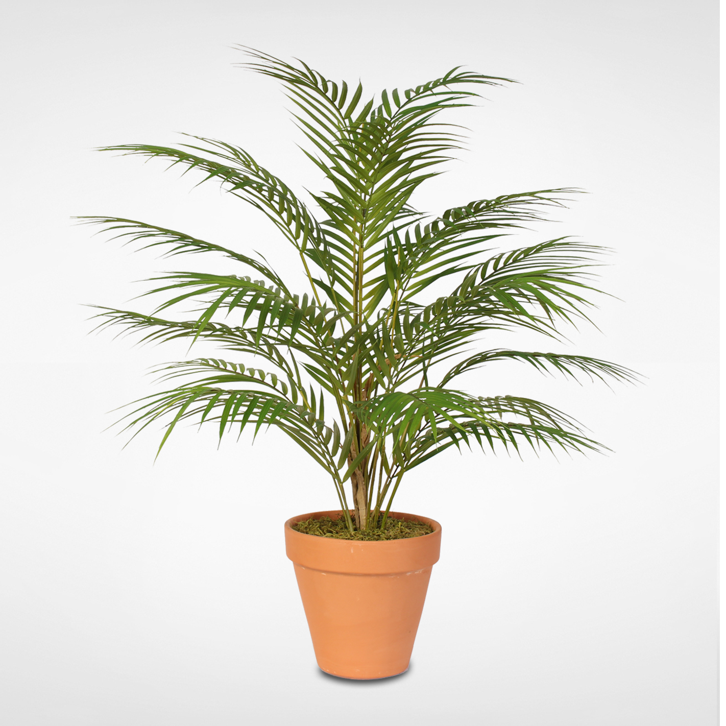 Real Touch Areca Palm Plant in a Small Black Clay Pot