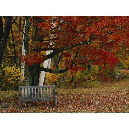 Empty Bench under Maple Tree, Twin Ponds Farm, West River Valley, Vermont, USA Print Wall Art By Scott T. - Maples Farm Halloween