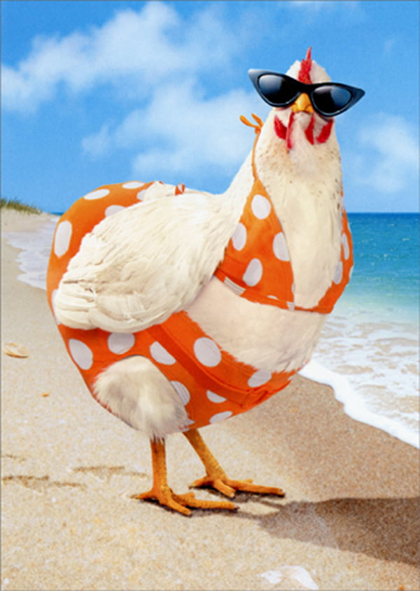 Avanti Press Avanti Press Bikini Chicken Funny Humorous Feminine Birthday Card For Her Woman Walmart Com Walmart Com 272 likes · 2 were here. avanti press avanti press bikini chicken funny humorous feminine birthday card for her woman walmart com