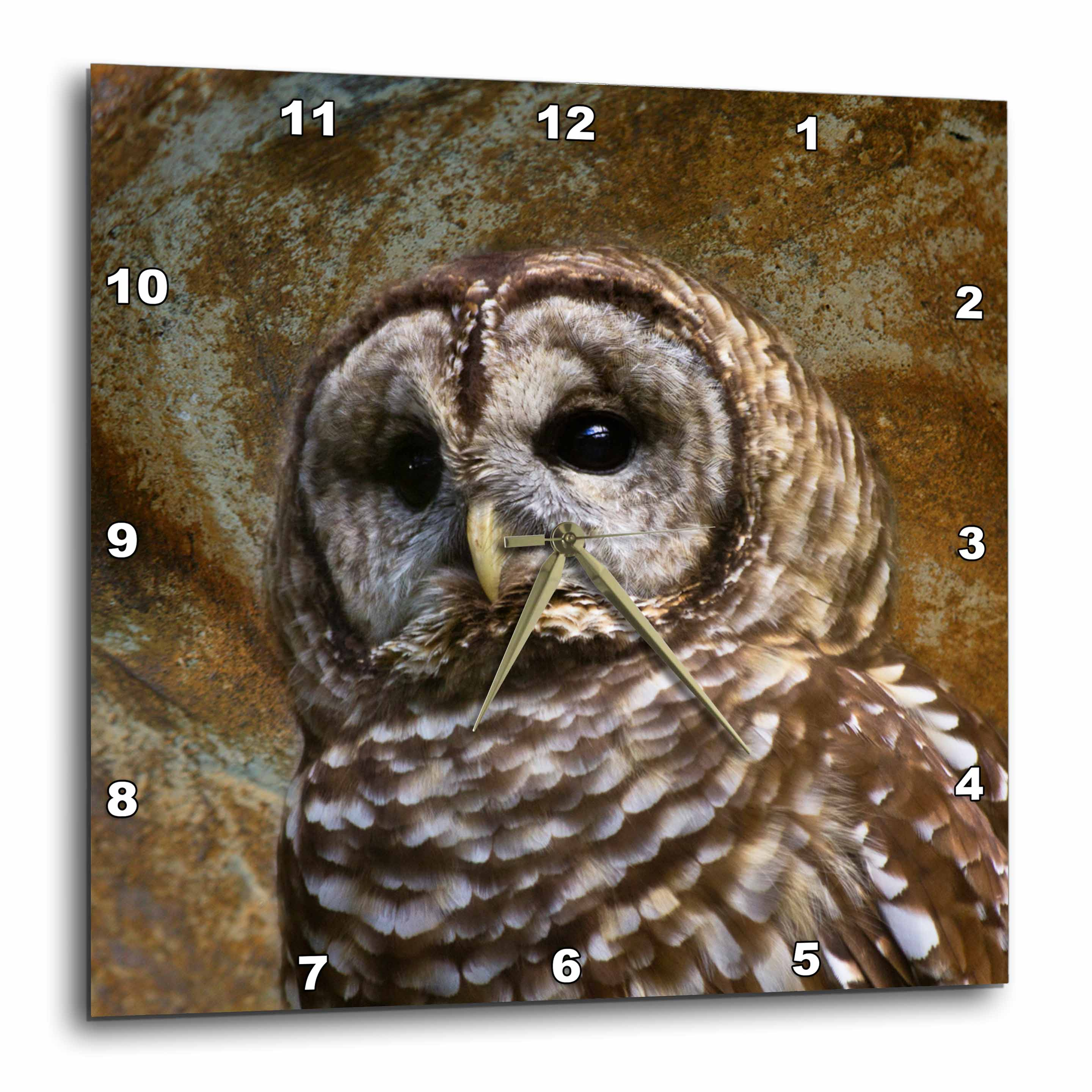 3dRose Barn Owl fine art image - home décor , Wall Clock, 10 by 10-inch