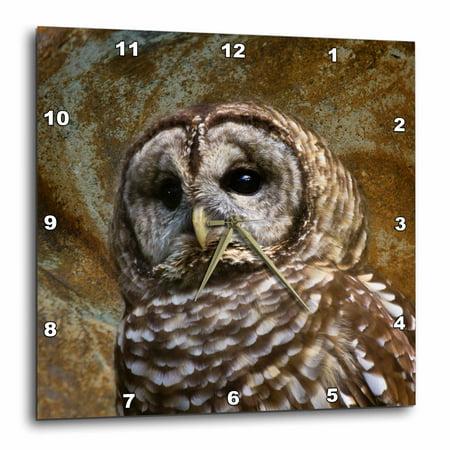 3dRose Barn Owl fine art image - home décor, Wall Clock, 10 by 10-inch