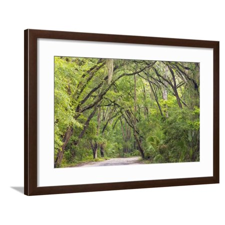 White Oak State Park Halloween (USA, South Carolina, Edisto Beach State Park. Oak Trees Line Road Framed Print Wall Art By Don)