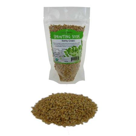 Organic Barley Seeds - 8 Oz - Whole (Hull Intact) Barleygrass Seed - Ornamental Barley Grass, Juicing - Grain for Beer Making, Emergency Food Storage &