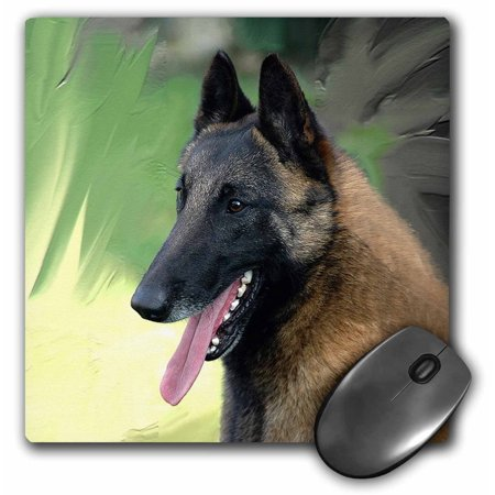 3dRose Belgian Malinois Portrait, Mouse Pad, 8 by 8 inches