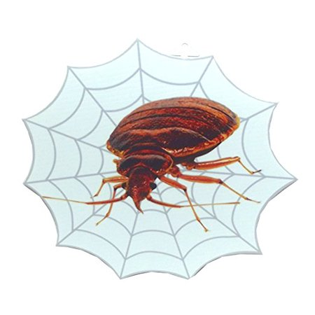 Aahs Engraving Halloween Spiderweb Hanging Decoration, 12 inches Bed Bug - Halloween Bugs Bunny Witch