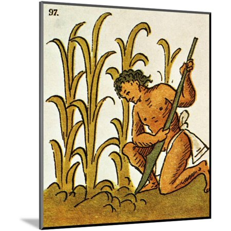 Aztec Wall Mount - Illustration of an Aztec Man Cultivating Crops from the Florentine Codex Wood Mounted Print Wall Art