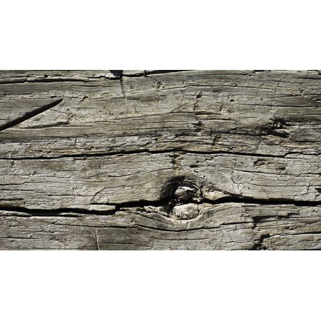 Peel-n-Stick Poster of Background Design Wood Bark Texture Tree Stump Poster 24x16 Adhesive Sticker Poster Print