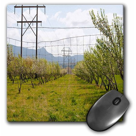3dRose Orchard of Trees on Green Grass Just off Bench Road in Southern Utah  with Electric Poles in Distance, Mouse Pad, 8 by 8 inches