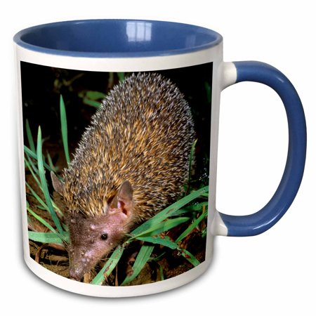 3dRose Madagascar, Ankarana, Greater Hedgehog tenrec wildlife-AF24 POX0057 - Pete Oxford - Two Tone Blue Mug, 11-ounce
