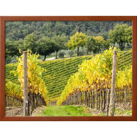 Autumn Vineyards Rows with Bright Color Framed Print Wall Art By ...