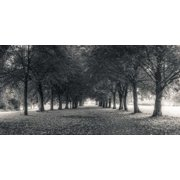 Pathway through trees in forest Stretched Canvas - Assaf Frank (10 x 20)