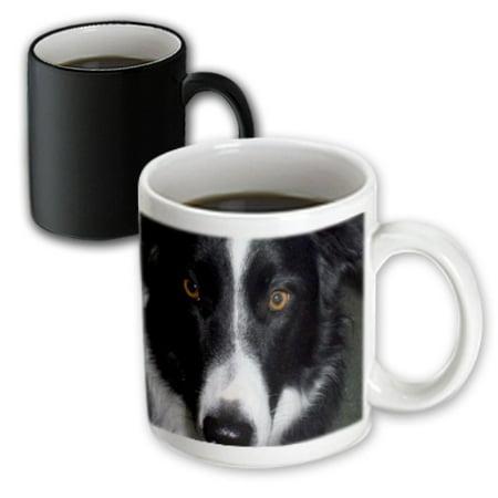 3dRose Border Collie Macro, Magic Transforming Mug, 11oz