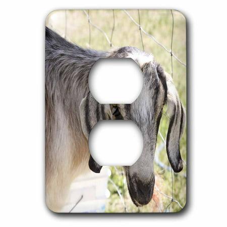 Plug Farm (3dRose Farm Goat- Animals- Nature - 2 Plug Outlet Cover (lsp_43941_6))