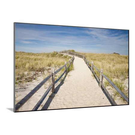 Cape Cod Wall Mount - Dunes on Cape Cod National Sea Shore in Cape Cod, Boston, Usa Wood Mounted Print Wall Art