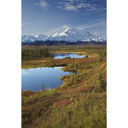 Scenic View Of Tundra Ponds And Fall Colors With Mt Mckinley In The Background Denali National Park Alaska Stretched Canvas - John Delapp  Design Pics (12 x 19) ()