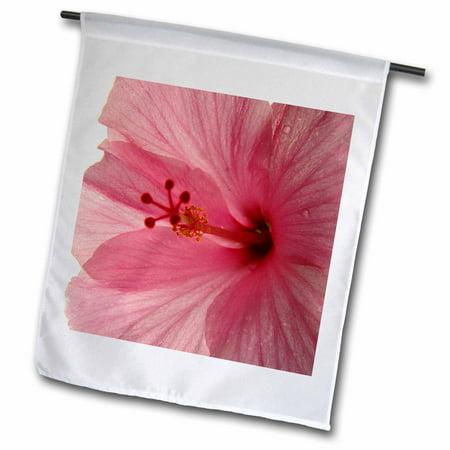 3dRose Dewey Pink Hibiscus - Garden Flag, 12 by 18-inch