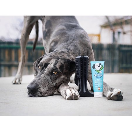 Bristly Brushing Stick Dog Toothbrush - Best Dog Chew Toy and Dental Chew (Extra Large,