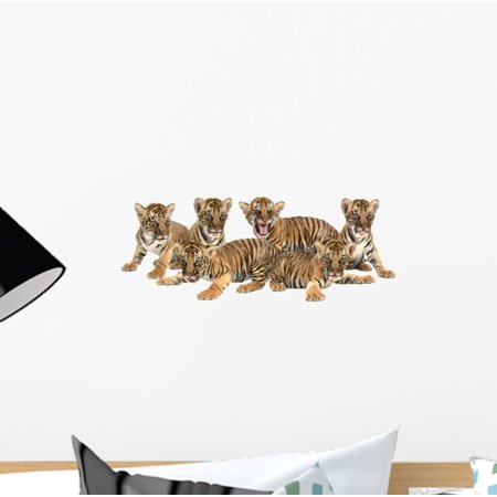 Baby Bengal Tiger Wall Decal Sticker, Wallmonkeys Peel & Stick Vinyl Graphic (12 in W x 5 in